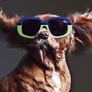 BY-CHILL-The-Fat-Jewishs-dog-Toas-stars-in-Karen-Walkers-Eyewear-campaign